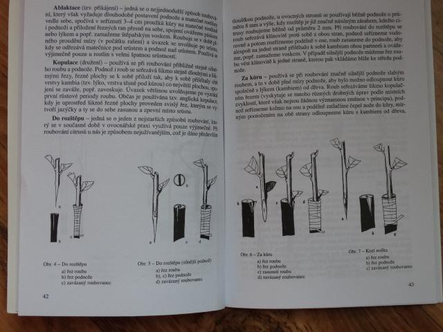 kniha o citrusech 2