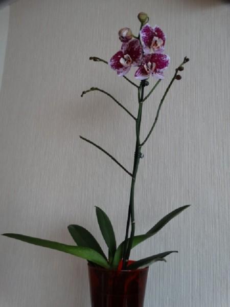 orchidka Kauf 24.3.17